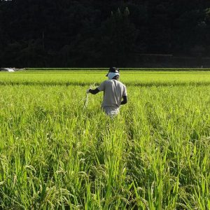 Ujamaa Farm<br>